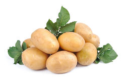 Potato close up Royalty Free Stock Images