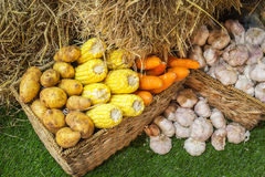 Potato corn and carrot a wicker basket. Multiple different vegetables in a wicker basket against the green background Royalty Free Stock Images