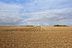 Potato crop at harvest time Stock Photos