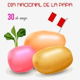 Potato day in Peru. The card potato day in Peru. Vectot colored illustration royalty free illustration