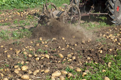 Potato digger or harvesting. Pulled by a farm tractor Stock Photo
