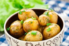 Potato with dill and scalliom Royalty Free Stock Images
