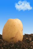 Potato on dirt Royalty Free Stock Photography