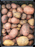 Potato is in the drawer Royalty Free Stock Images