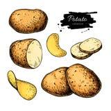Potato drawing set. Vector Isolated potatoes heap, sliced Royalty Free Stock Photos