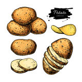Potato drawing set. Vector Isolated potatoes heap, sliced Stock Images