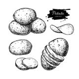 Potato drawing set. Vector Isolated potatoes heap, sliced pieces. And chips. Vegetable engraved style illustration. Detailed vegetarian food sketch. Farm market stock illustration