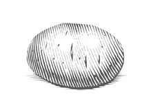 Potato. Engraving style vegetable. Royalty Free Stock Photography