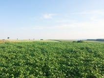 Potato farm in Luxembourg, Europe. Potato farm in Luxembourg,  Europe royalty free stock photos