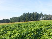 Potato farm in Luxembourg, Europe. Potato farm in Luxembourg,  Europe royalty free stock photo