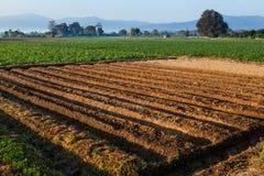Potato farmland Stock Photography