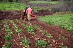 Potato field Stock Photo