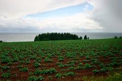 Potato Field. This is a potato field under a stormy sky on Prince Edward Island, Canada Stock Photo