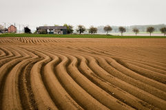 Potato Field. A beautiful landscape with lines of the farmland Royalty Free Stock Photography