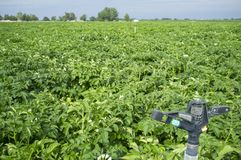 Potato field in blossom. Water pivot sprinkler stopped at the forefront. Extremadura, Spain stock photo