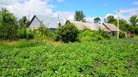 Potato field in front of rural house in Russia stock video footage