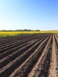 Potato field . furrow Stock Photography