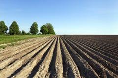 Potato field . furrow Royalty Free Stock Image