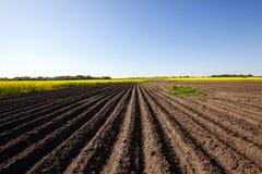 Potato field , furrow Royalty Free Stock Images