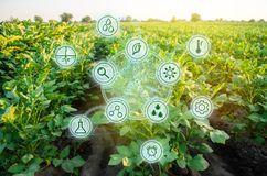 Potato in the field. High technologies and innovations in agro-industry. Study quality of soil and crop. Scientific work and. Development of new methods and stock photography