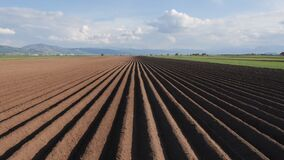 Free Potato Field In Spring After Sowing - Camera Rise And Reveal The Furrows Stock Photo - 182977310