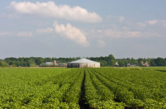 Potato field and manure storage Stock Image