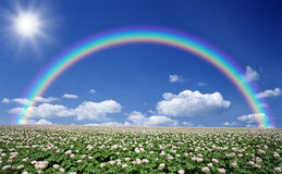 Potato field with sky and rainbow.  Royalty Free Stock Images