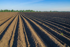 Potato field in spring Royalty Free Stock Image