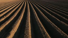 Potato field in spring with long lines running to the horizon