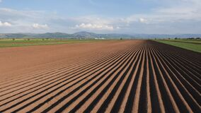 Potato field in spring after sowing - camera moves by the furrows