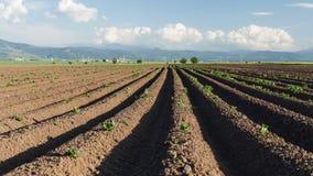 Potato field sunrise in spring timelapse