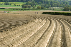 Potato Fields and bikers in natural landscape Royalty Free Stock Photos
