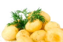 Potato with fresh fennel Royalty Free Stock Images