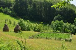 Potato garden and haystacks. Haystacks and small potato garden in the green meadow near forest. Idyllic summer rural scene Stock Images