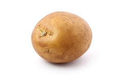 Potato Germinating Royalty Free Stock Images