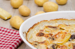 Potato gratin in a casserole Stock Photography