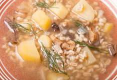 Potato gratin with salty mashrooms and dill in a plate Royalty Free Stock Photography