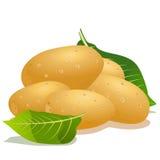 Potato and green leaf Stock Photo