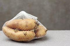 Potato growing long time keep Royalty Free Stock Image