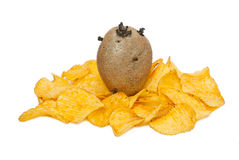 Potato. Had flowers in  spring - it will be soon possible to eat chips Royalty Free Stock Photos