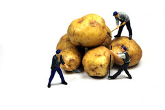 Potato harvest Royalty Free Stock Photo