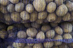 Prepacked potatoes. The potato harvest is packaged in sack bags Stock Images
