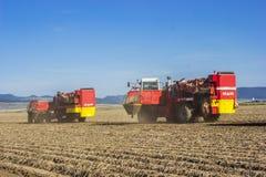 Potato Harvesting Stock Images
