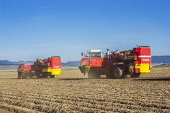 Potato harvesting. With big machinery Stock Images