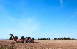 Potato harvesting on summer field Stock Image