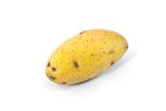 Potato isolated on white background royalty free stock photo