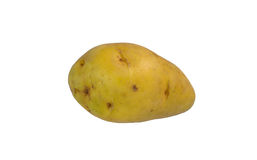 Potato. New potato on white background royalty free stock image