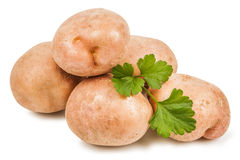 Potato and parsley leaves Royalty Free Stock Image