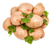 Potato and parsley leaves Royalty Free Stock Photo