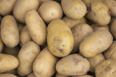 Potato. Stock Image